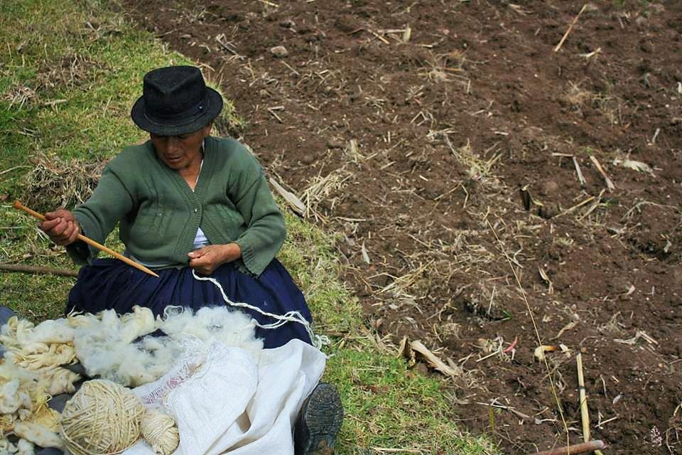 tosatura pecore ecuador