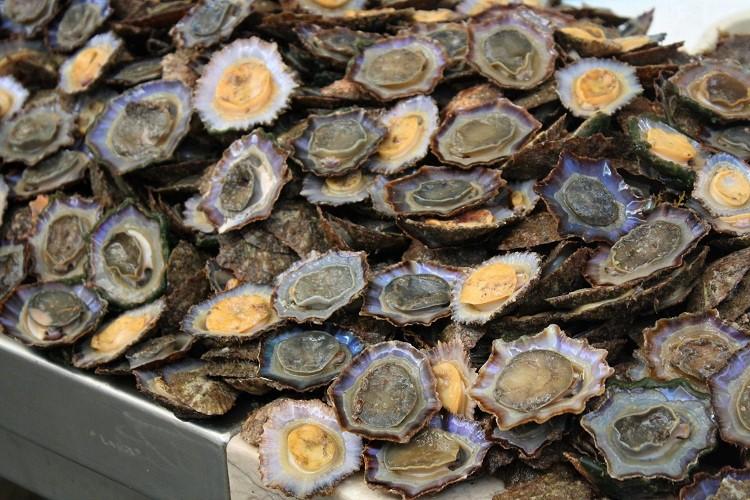 lapas, patelle dell'oceano Atlantico - ammacucena