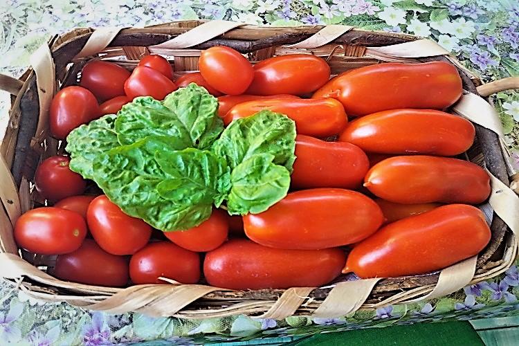 pomodori di solchiaro - amma cucenà